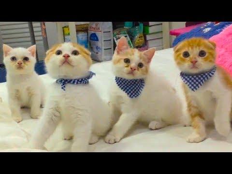 Chú mèo con Rửa mặt như mèo